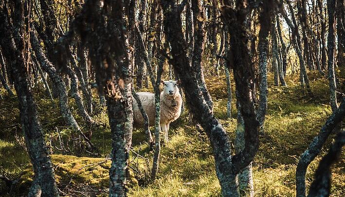 Shepherd My Sheep- How to Lead Biblically