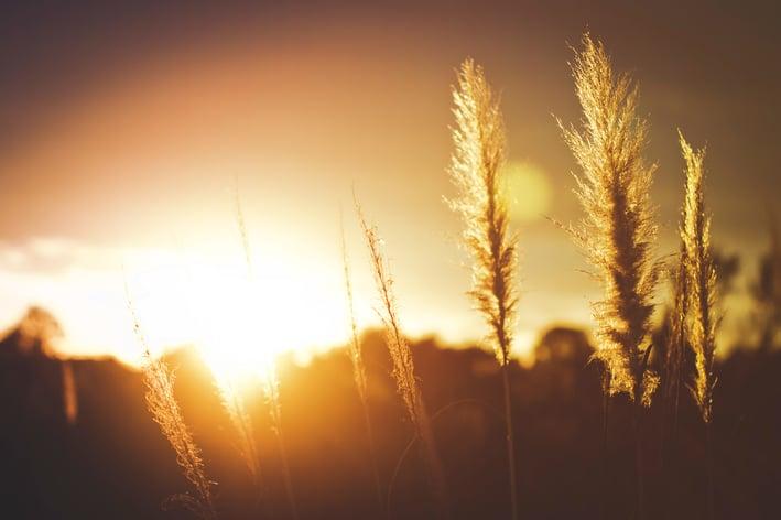 Dos estilos de vida: Aprendiendo del Salmo 1 (parte 2)